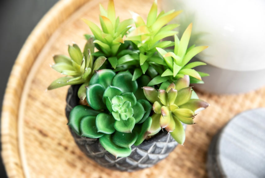 succulent-decoration-interior-design